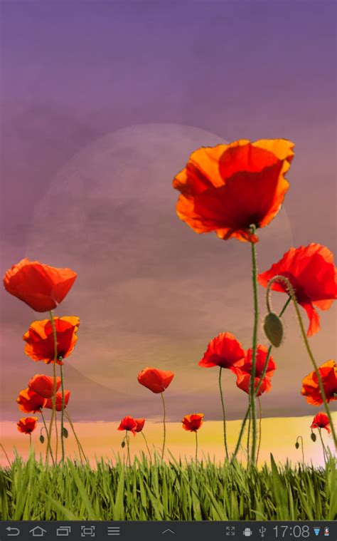 google images poppies poppy field free android apps on google play