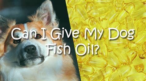 can dogs fish can dogs eat hazelnuts pet consider