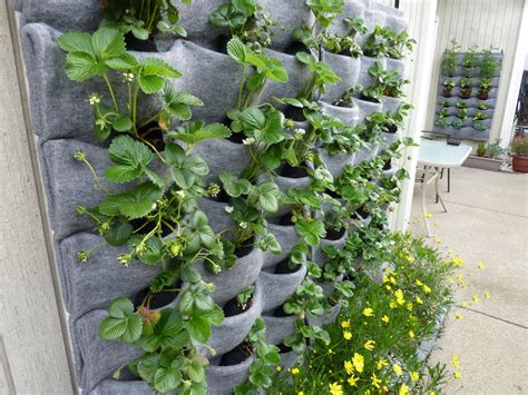 wall garden plants plants on walls vertical garden systems harvest walls