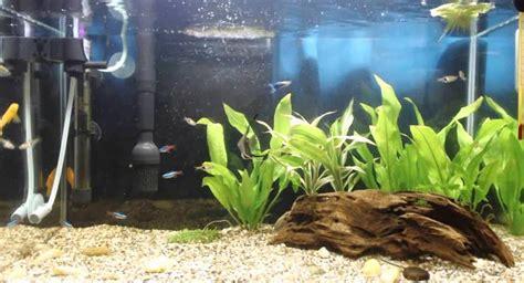 cara membuat filter bawah pada aquarium manfaat co2 terhadap kesehatan ikan aquascape aquarium