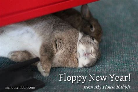 new year rabbit description floppy new year from my house rabbit my house rabbit