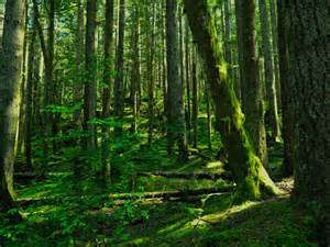 Deep Forest Green deep forest 2 by krhphotography on deviantart