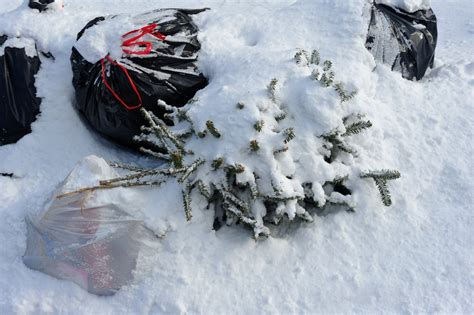 disposing of your christmas tree in leicestershire map waste