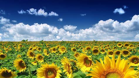 wallpaper hd widescreen high quality desktop flower summer flower wallpaper high definition high quality