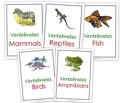 printable animal kingdom our worldwide classroom our animal kingdom notebooks with