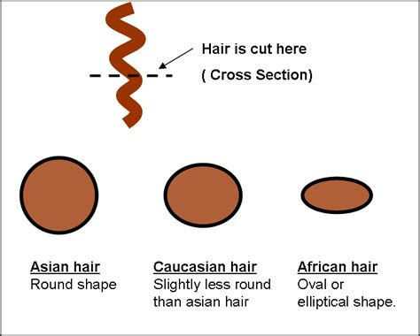 hair cross section hair extensions indian hair cross section zala clip in