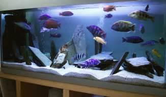 The Best Tropical Fish for Beginner Tanks   Aquaec Tropical Fish