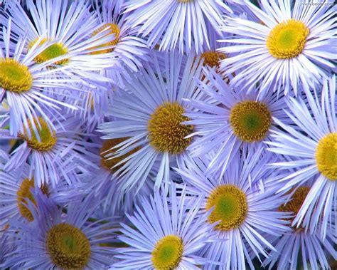 desktop gratis fiori sfondo quot sfondi natura 42 quot 1280 x 1024 natura fiori