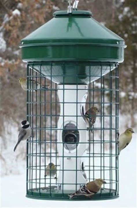 best 25 squirrel proof bird feeders ideas on