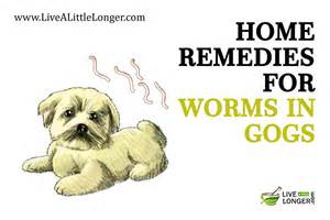 how to deworm a home remedies 10 best home remedies for worms in dogs