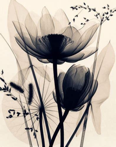 x ray poster design symbolism lotus flower inkspiration