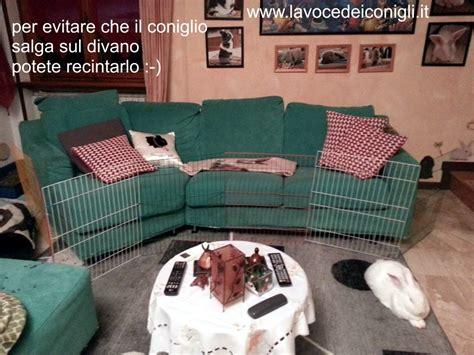 pipi sul divano pipi sul divano come pulire idee per il design della casa