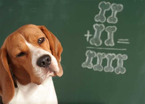 are dogs smarter than cats are dogs smarter than cats new research suggests maybe reader s digest