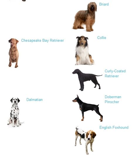 large breeds large breeds general information
