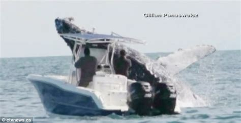 fairy boat blows up in mexico thar she blows incredible moment a humpback whale