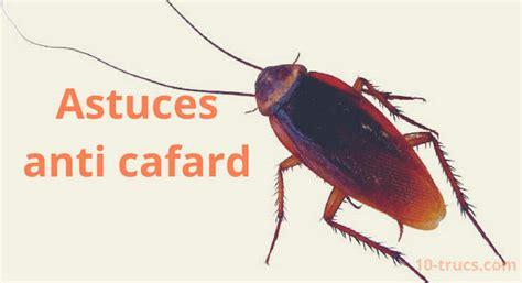 Tuer Un Cafard by Anti Cafard 10 Trucs Pour 233 Liminer Les Cafards