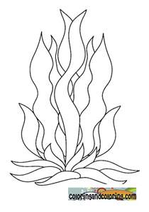 free coloring pages of seaweed for