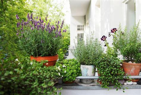piante in terrazzo piante per terrazze piante da terrazzo piante per terrazzo