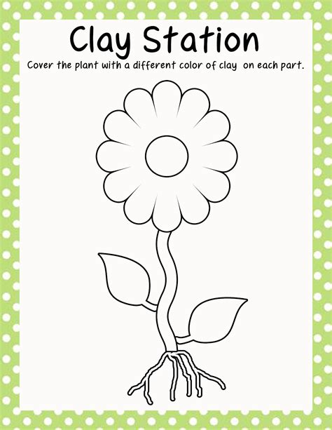 plants coloring pages preschool parts of a plant coloring pages