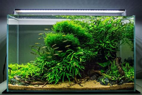 Aquascaping Supplies by 755 Best Aquascaping Planted Tanks Aquariums Images On