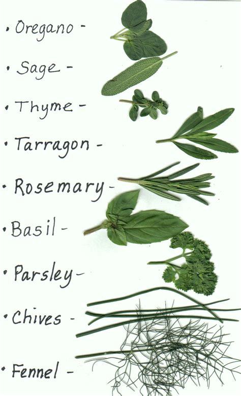 types of garden herbs plant an herb garden this and use them it s also
