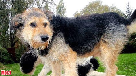 hunde die ein neues zuhause suchen diese hunde suchen ein neues zuhause tierecke vermittelt