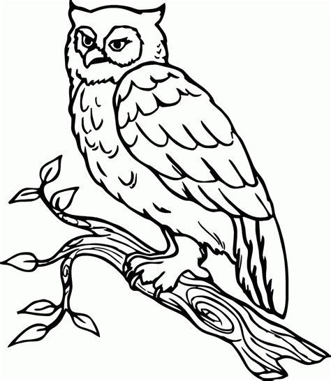 Bantal Owl Burung Hantu Hijau gambar wallpaper burung hantu kartun gudang wallpaper