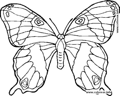 mariposa 2 animals printable coloring pages kids