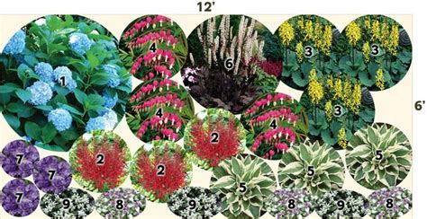 pre planned perennial garden layout hydrangea all summer