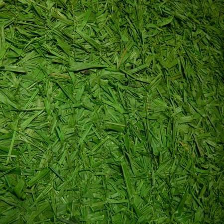 green raffia grass mat anderson s
