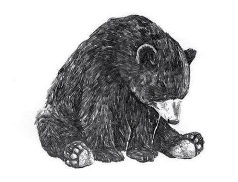 black bear tattoo designs 24 designs