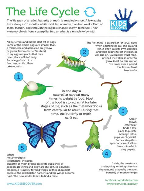 emotional butterfly the metamorphosis and the lessons learned books best 25 butterfly metamorphosis ideas on