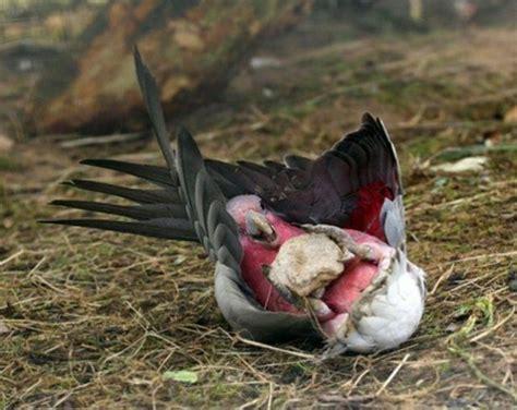 imagenes animales grasiosos fotos de animales graciosos