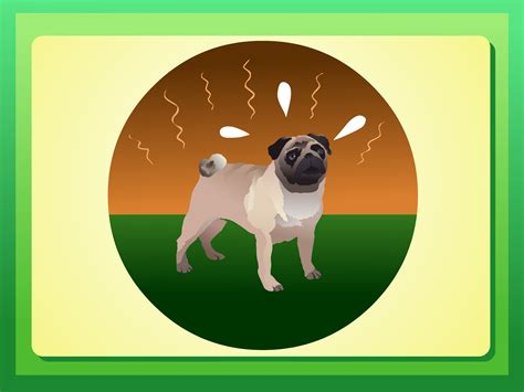 how to care for a pug puppy how to care for a pug 4 steps with pictures wikihow