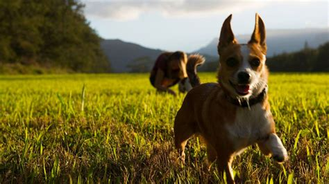 moving to hawaii with dogs moving your pet to hawaii the complete guide hawaii real estate market trends