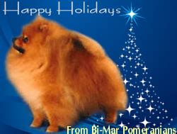 bi mar pomeranians breeders give thanks for thier dogs thedogpress