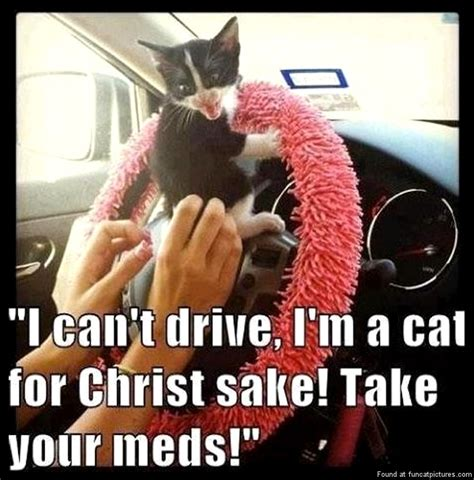 Funny Memes About Driving - medicine fun cat pictures