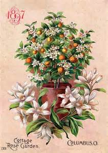 cottage garden flower seeds the world s catalog of ideas