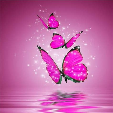 wallpaper bergerak kupu kupu download gratis kupu kupu animasi wallpaper gratis kupu