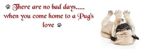 pug pics with quotes pug cover photo for your timeline pug quotes pug quotes