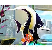 Fillum Reviews Only More Proper Like Finding Nemo