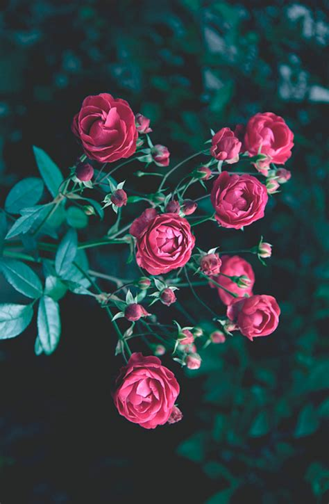 imagenes tumblr we heart it imagenes de flores tumblr
