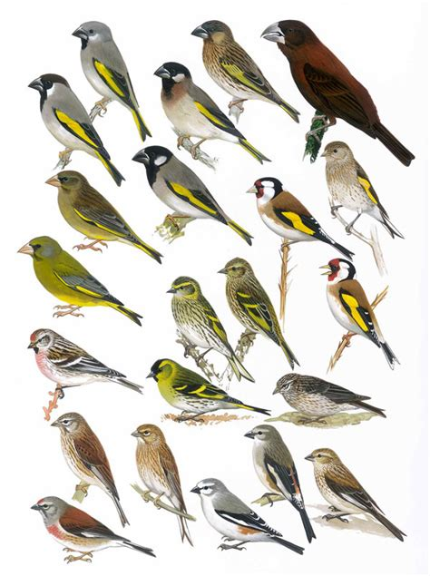 the birds of africa volume vii birds of africa vol vii plate 32 african bird club