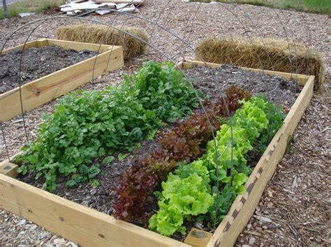 orti da terrazzo orto giardino ortaggi orto per giardino