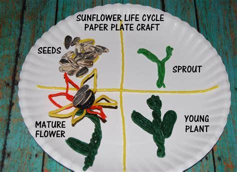 wikki stix sunflower life cycle  crafts  kids wikki stix