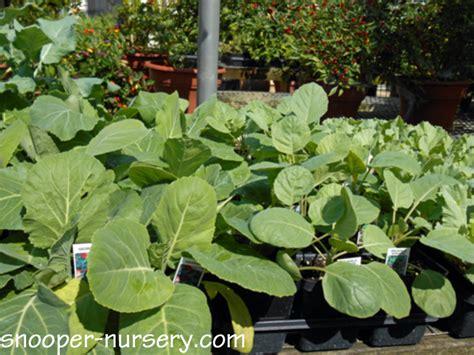 the organic house by ecotech fall garden vegetables