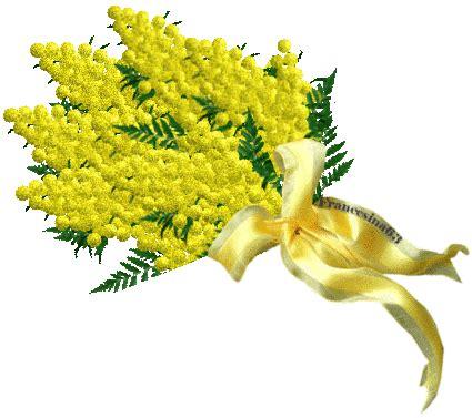 festa della donna fiore la mimosa il fiore simbolo della festa della donna