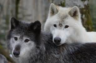 la des loups orlu 2017 ce qu il faut