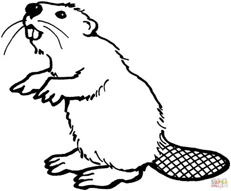 beaver coloring pages preschool american beaver coloring page free printable coloring pages