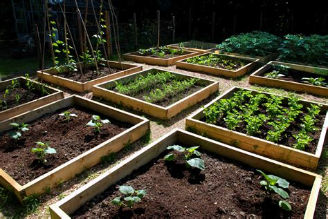 Raised Bed Vegetable Garden Layout Progress In The Raised Bed Vegetable Garden The Modern Gardener